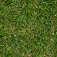 Grass029