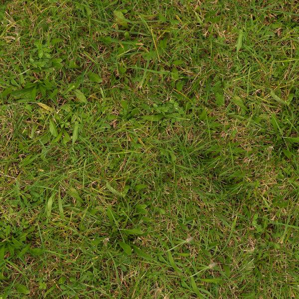 Grass030s.jpg