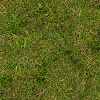 Grass030