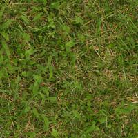 Grass032