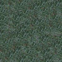 Grass037