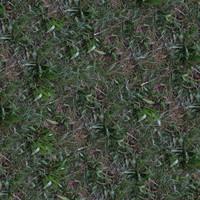 Grass038