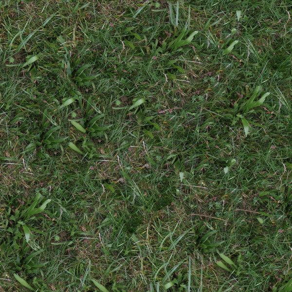 Grass039s.jpg