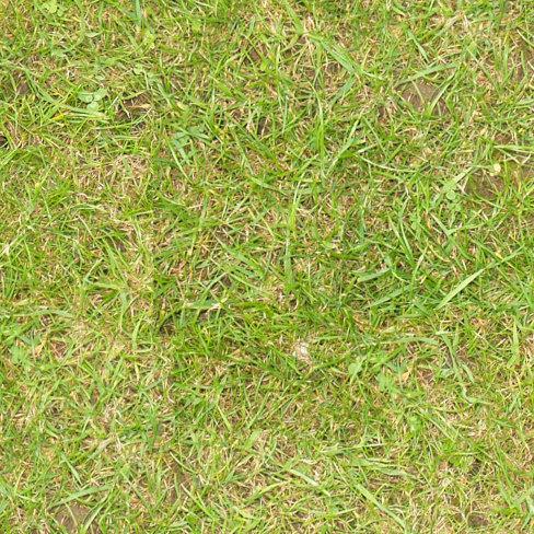 Grass049s.jpg