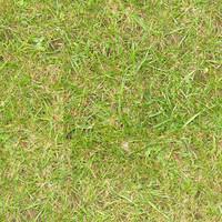 Grass049