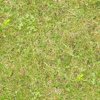 Grass050