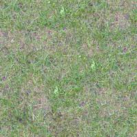 Grass053