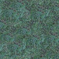 Grass054
