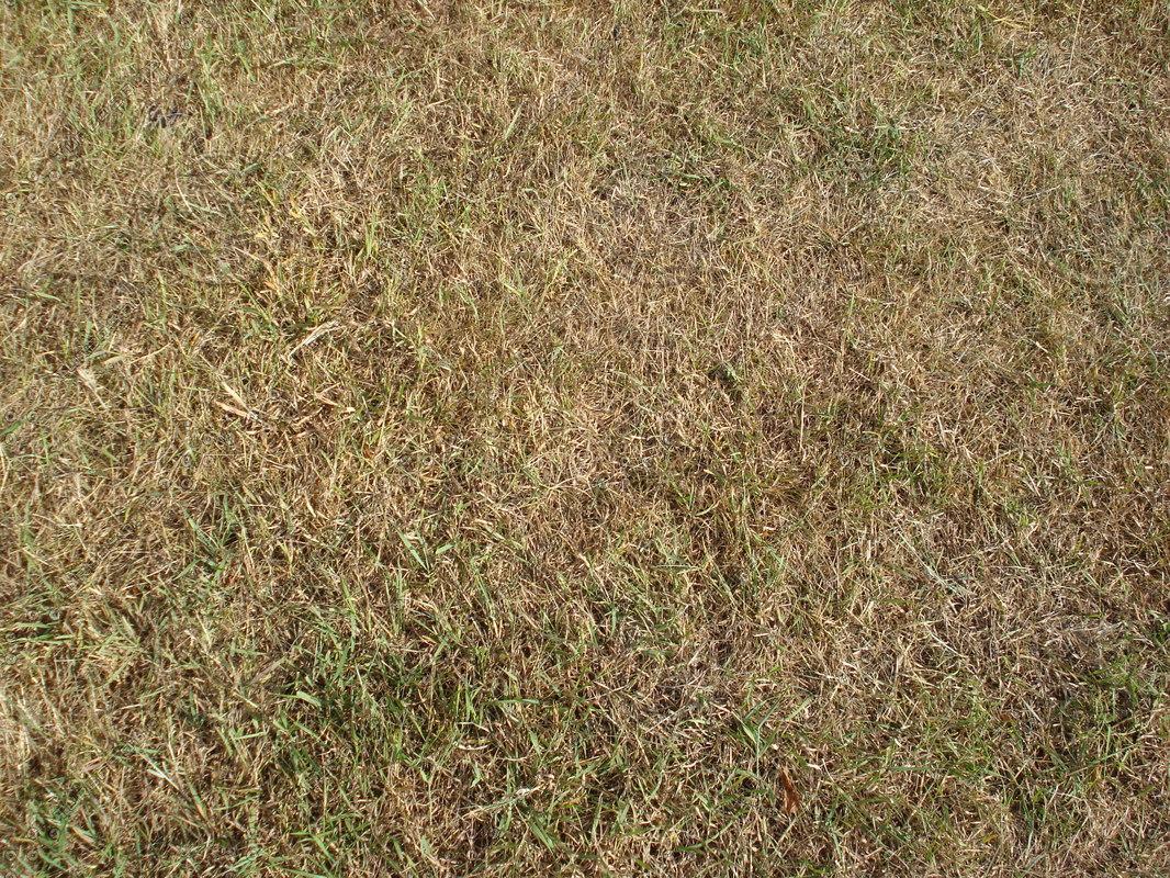 Grass_100A.JPG