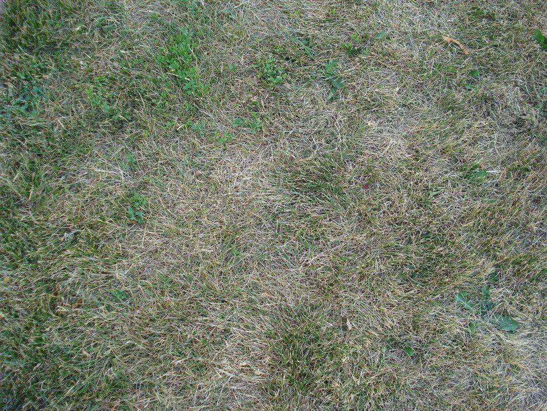 Grass_100B.JPG