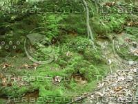 Moss_3.JPG