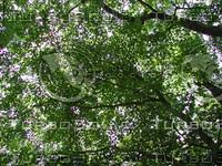 Woods_7.JPG