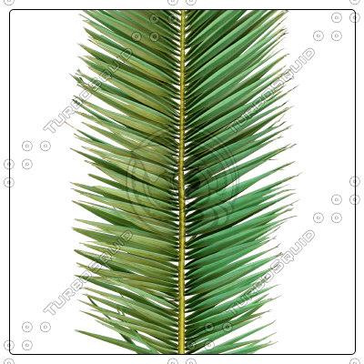 cocos_palm_leaf01_preview01.jpg