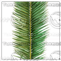 COCOS PALM LEAF 01