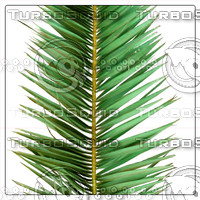 COCOS PALM LEAF 02