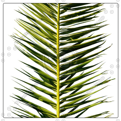 cocos_palm_leaf03_preview01.jpg