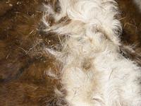cow hair 01.jpg