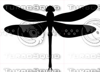 dragonflyai12.ai