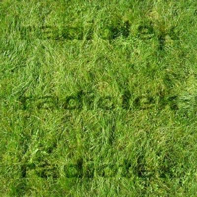 grass_01_thumb.jpg