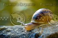 snail001.bmp