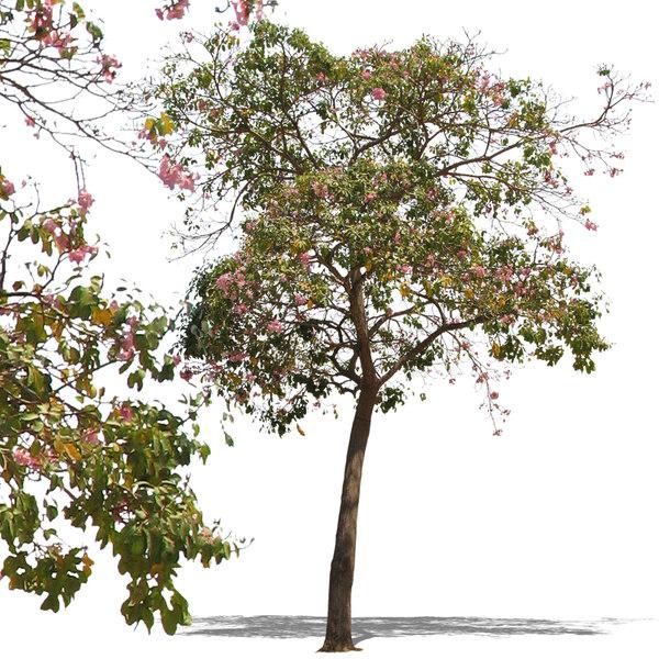 tree47p.jpg