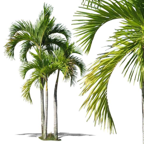 tropical34.jpg