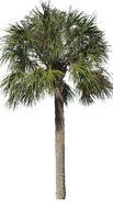 Palm 02
