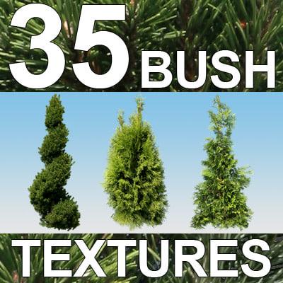 Bush-Textures-3-MASTER.jpg