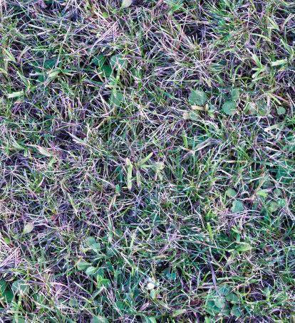 Grass002s.jpg