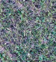 Grass002
