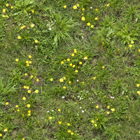 Grass016