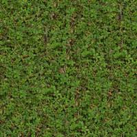 Grass025