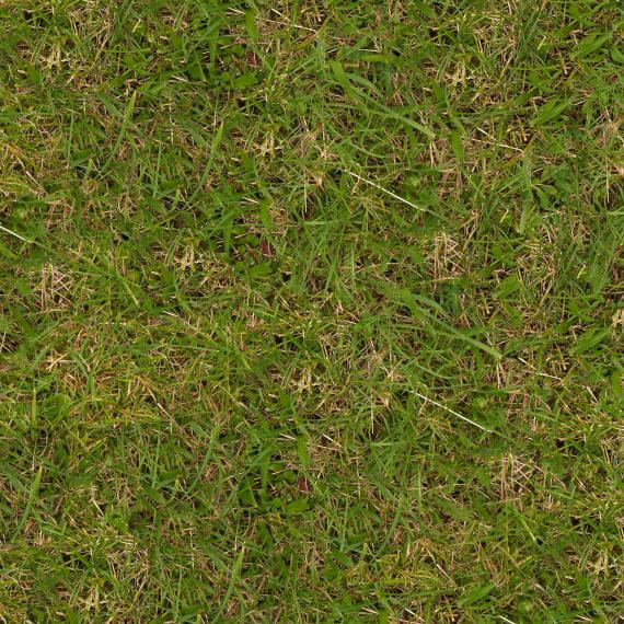 Grass031s.jpg