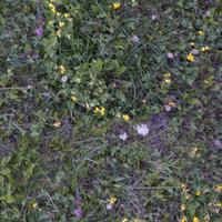 Grass041