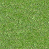 Grass058