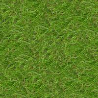 Grass061