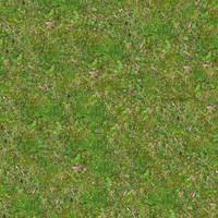 Grass064