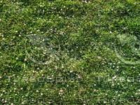 Grass_100C.JPG