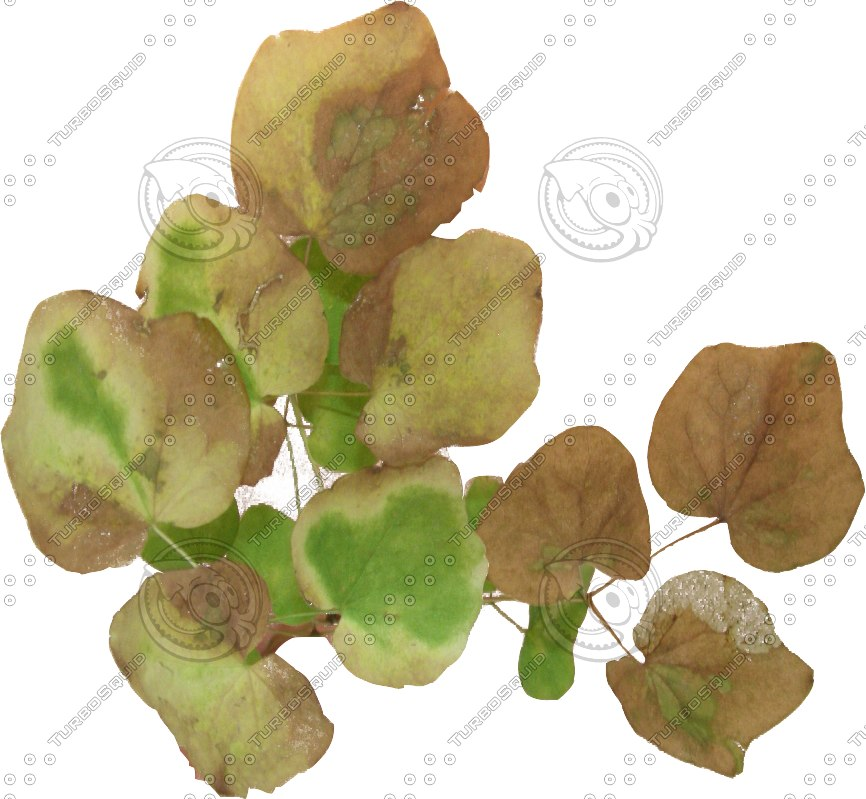 LeafBunch1.png