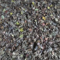 Fallen Leaves seamless tile