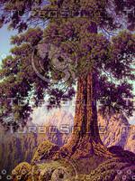 Oak Tree / MF-001