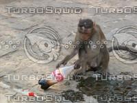 Monkey_17.jpg