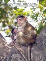 Monkey_6.jpg