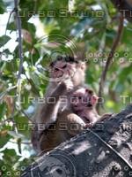 Monkey_8.jpg