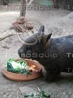 Pig_Rat_11.jpg