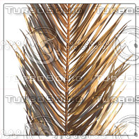 COCOS PALM DRY LEAF 01