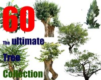The Ultimate Tree Collection 1
