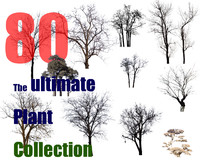 The Ultimate Tree Collection 8