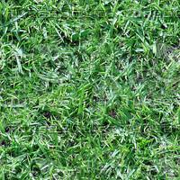 grass_01_tile.jpg