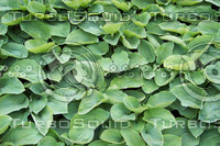 green leaves 01.jpg